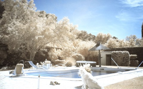 Infrared Photography #1